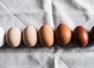 تخم مرغ قهوه ای یا روشن