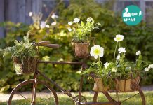 باغ و باغچه