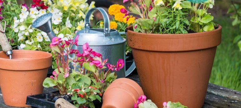 ایجاد خانه ای جدید برای گیاهان با استفاده از تعویض گلدان