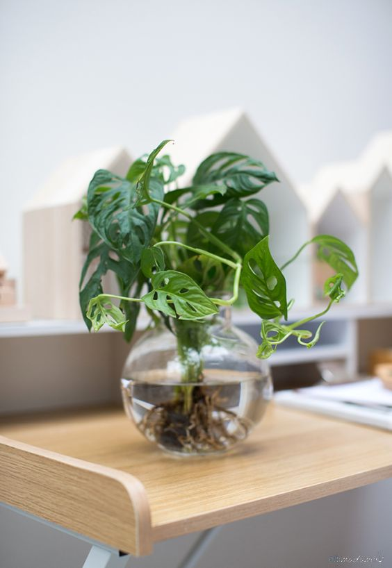 گیاهان تزئینی