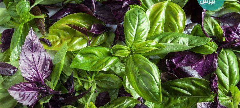 با خواص درمانی چند گیاه معطر بیشتر آشنا شویم