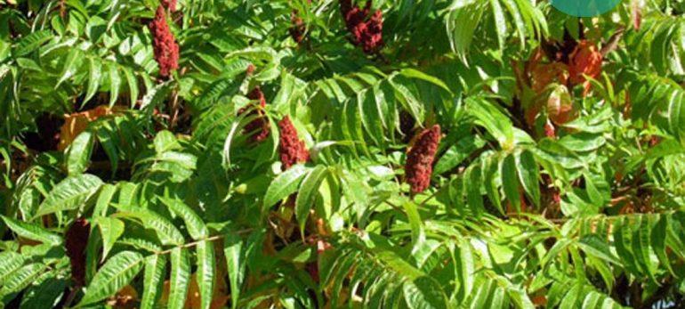 با این گیاهان هم غذای خوشمزه ای داشته باشید، هم سالم تر بمانید!