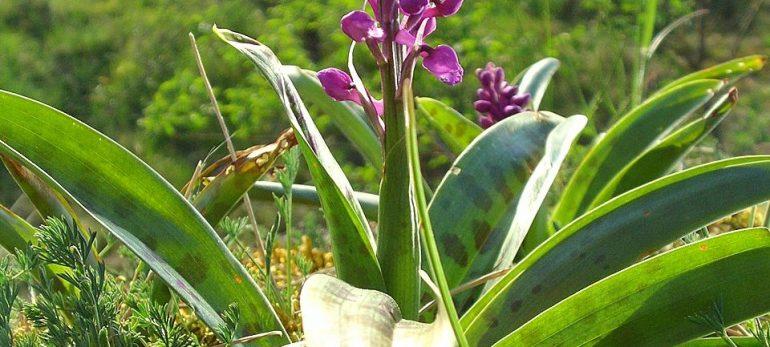 با خواص این چند گیاه معجزه آسا آشنا شویم