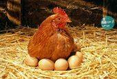 نگرانی مردم برای استفاده از مرغ و تخم مرغ
