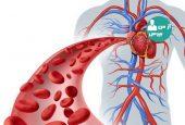 شناخت دستگاه گردش خون