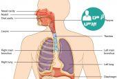 دستگاه تنفسی و اختلالات مربوط به آن را بیشتر بشناسید