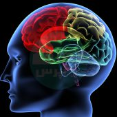 پیشرفت تکنولوژی و اتصال مغز سه انسان به یکدیگر